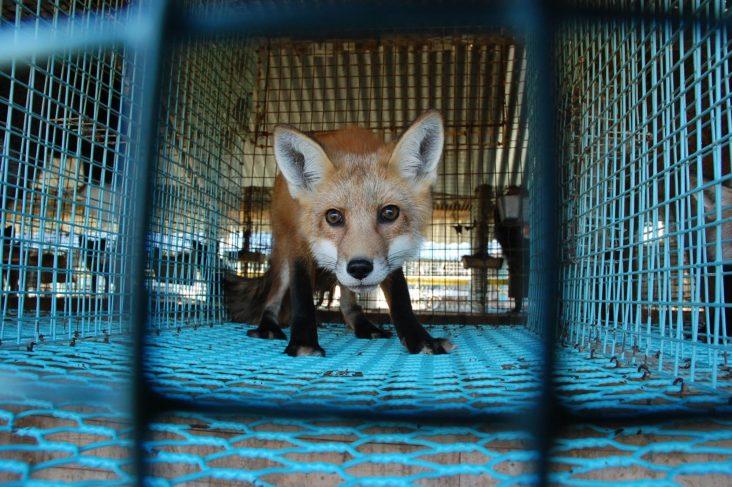 dyrebeskyttelsen rev i bur