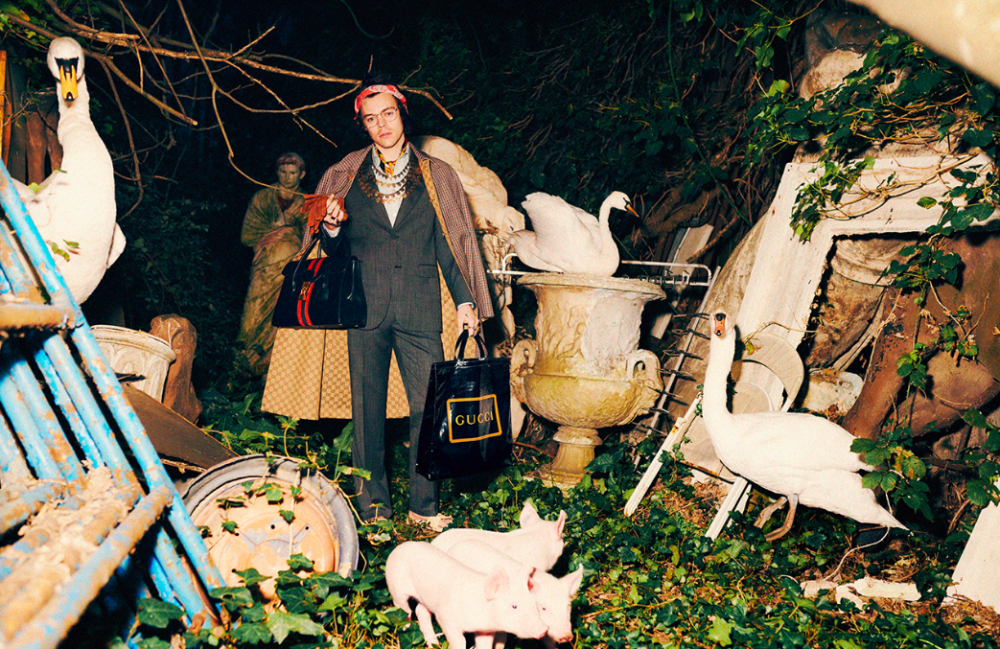 Harry styles for gucci